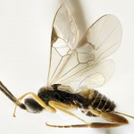 A study of wasps in Guanacaste, is published by National Geographic
