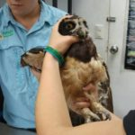 Shelter seeks help to care for and return animals to the wild