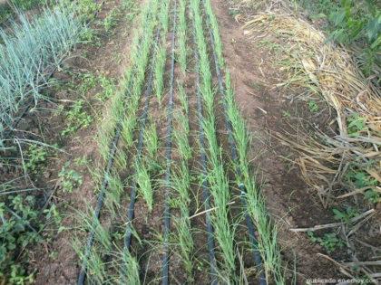 Asociación Agro-Orgánica Guanacasteca