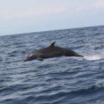 Experience a true natural show in Bahía Ballena