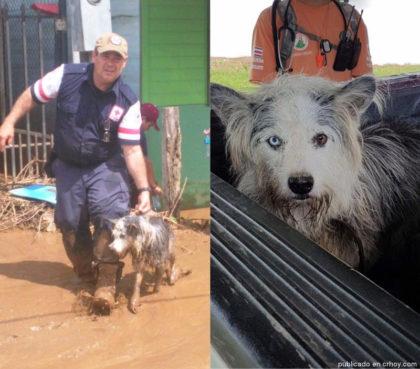 rescate-perro-otto