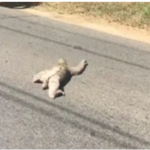Sloth stopped traffic in Dominical