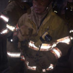 Firefighters saved 5 puppies from a fire in Escazú