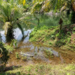 Lagoon formed after Otto is a threat for residents of Corredores