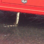 Snake scared bus passengers in Alajuela